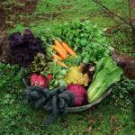 rp_vegetable-gardening.jpg
